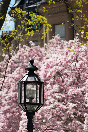 Lamp in Bloom