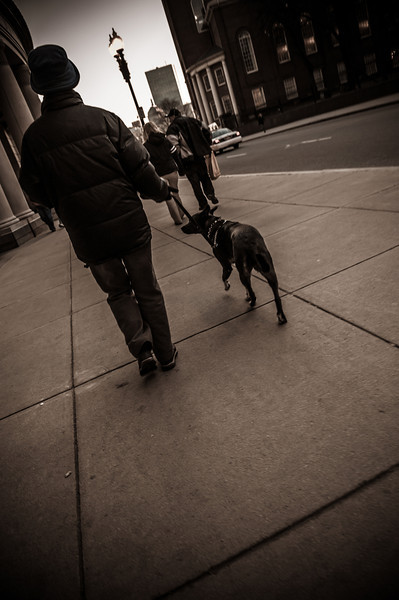 City Dog Walk