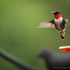 Humming_Bird-3281