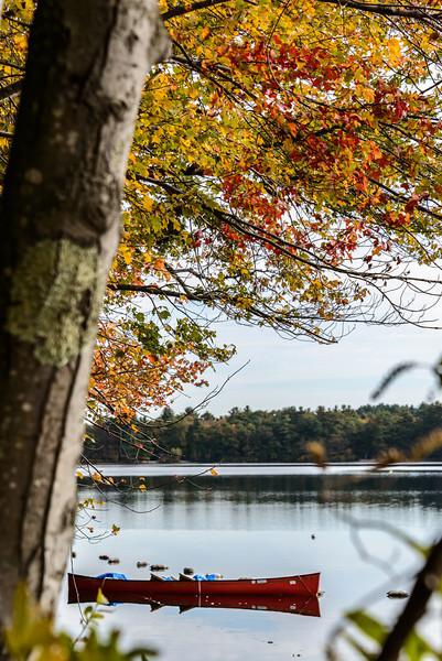 Autumn Window