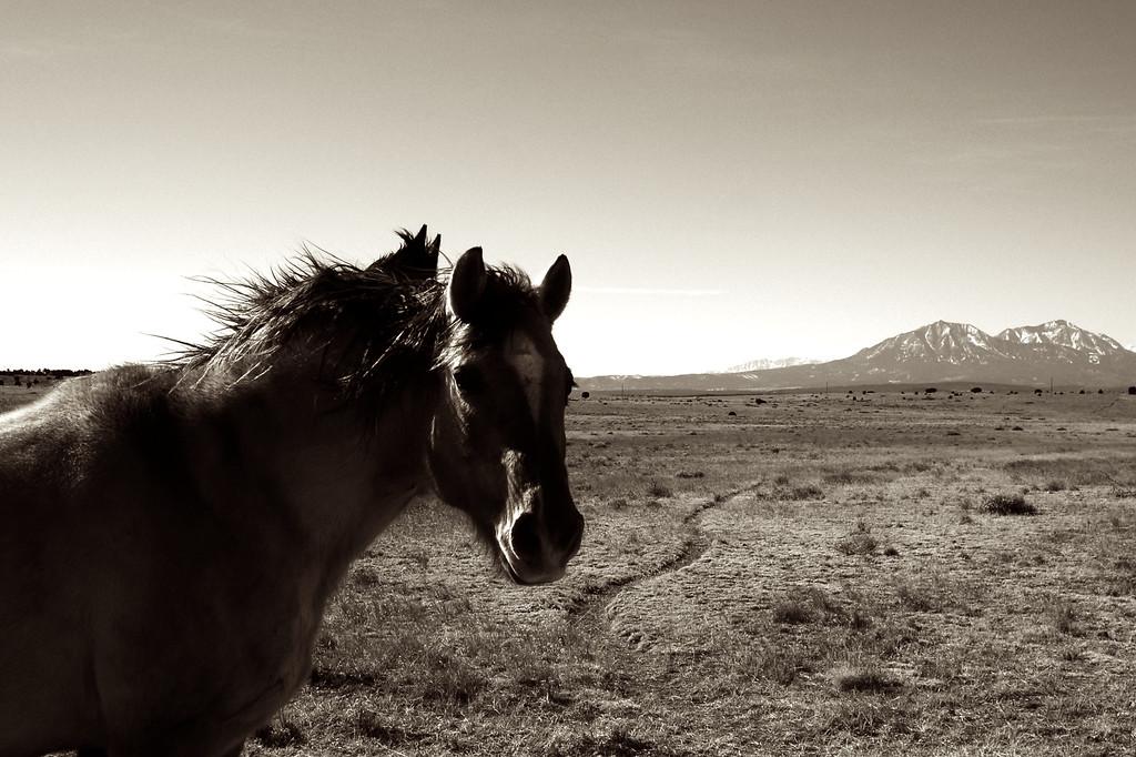 Mustangs - Southern Colorado, USA