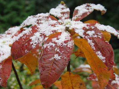 Portland - First Snow