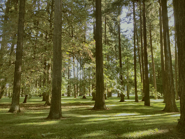 Portland Park Trees