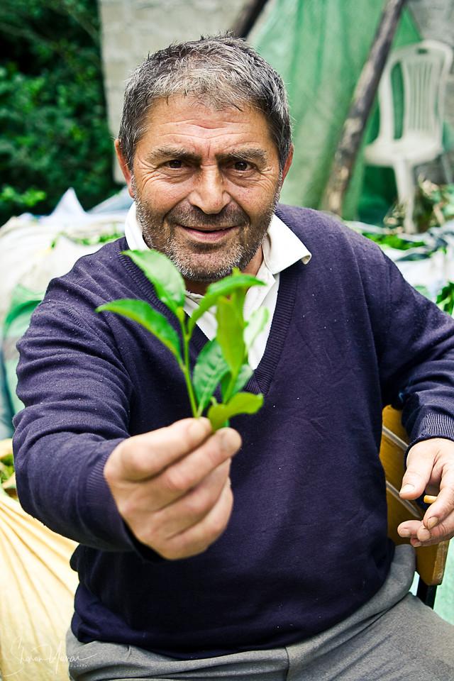 Farmer handing a tea leaf to the camera