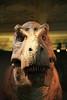 tyrannosaurus, natural history museum