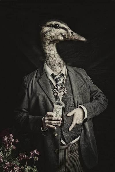 Drunk Duckling