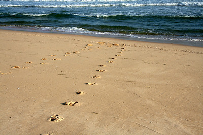 Footprints - Ilha de Tavira, Portugal