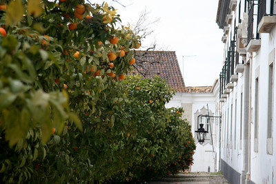 Orange trees in courtyard - Old City (Cidade Velha), Faro