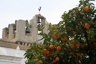 Orange tree by Sé Catedral - Old City (Cidade Velha), Faro