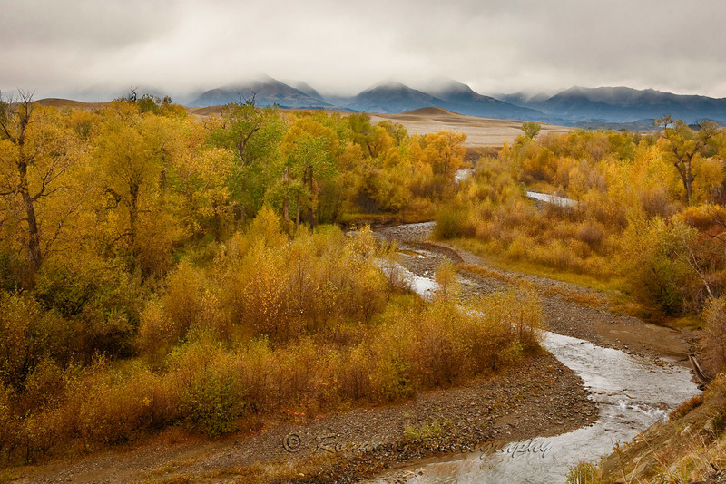 Fall colors with the Crazy Mountains shrouded in clouds