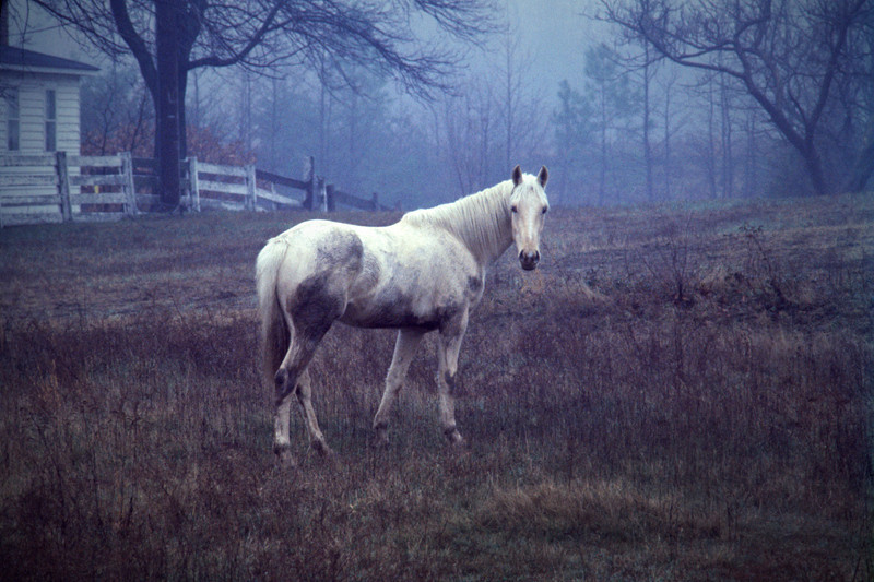 Misty - Southern Maryland
