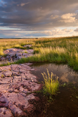 Standing Water and Prairie
