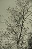 LCP 5 tree