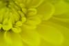 LCP Floral dreams 14