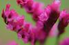 LCP Floral dreams 5