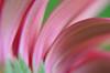 LCP Floral dreams 1