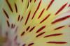 LCP Floral dreams 6