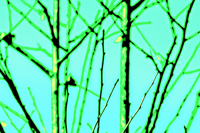 LCP-City-Tree
