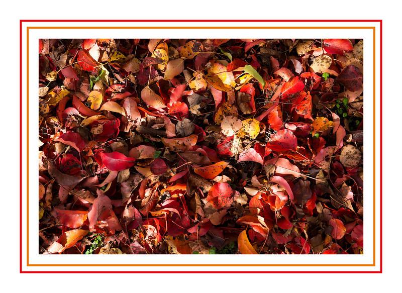 Fallen autumn fruit tree foliage - framed