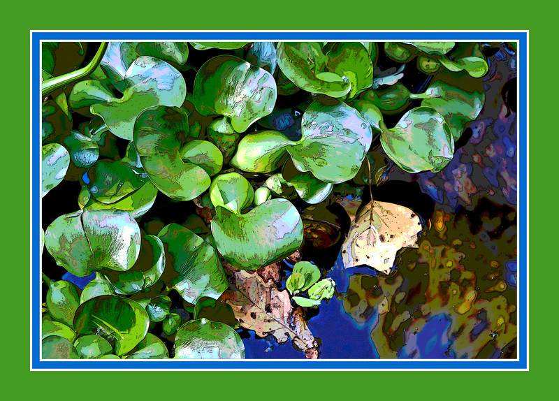 "Some aquatic plant that grew with large (relative to the leaves) bulbs at the base of each leaf.<br /> Filtered version:  Having a little fun with successive application of Posterize, then Poster Edges.<br /> <br /> For an unframed, unfiltered version of this photo, click here:  <a href=""http://arctangent.smugmug.com/Nature/Vegetation/Aquatic-plants/6743500_vkR3KP#1543055128_TBPRrQ7"">http://arctangent.smugmug.com/Nature/Vegetation/Aquatic-plants/6743500_vkR3KP#1543055128_TBPRrQ7</a>"
