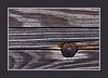 3 0 7 A<br /> TF<br /> <br /> Wood planks plus rivet on a boardwalk.<br /> <br /> Toledo Botanical Gardens,<br /> Ohio<br /> September 6, 2011