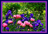 """Filtered version of 'Coral Charm' peonies and purple iris.<br /> (Posterize (6 levels) and smudge stick filters)<br /> See the unframed, unfiltered version here:  <a href=""""http://smu.gs/JH1RVC"""">http://smu.gs/JH1RVC</a><br /> <br /> Toledo Botanical Garden, Ohio<br /> May 13, 2012<br /> (nex5n)"""