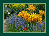 "Purple and yellow, one of my favorite color combinations in spring and autumn flowers.<br /> <br /> For an unframed version of this, see here:  <a href=""http://smu.gs/GWUvJL"">http://smu.gs/GWUvJL</a><br /> <br /> Temperate Dome, Hidden Lake Gardens Conservatory<br /> March 22, 2012<br /> (nex-5)"