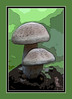 Imagination<br /> Filtration<br /> Creation...<br /> Mushrooms