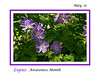 Wild Geranium - purple subject for Lupus Awareness Month (May)