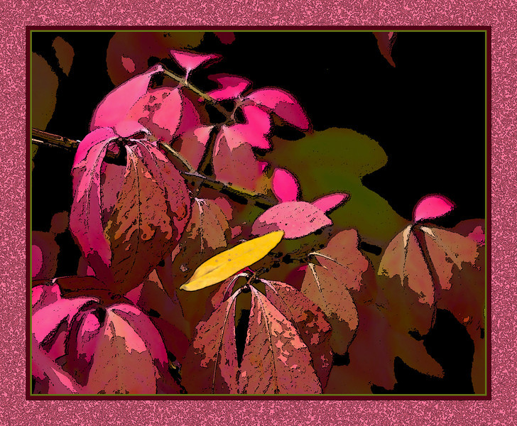 Frame version 2 - The outer frame has been treated with several filters to give it some texture.<br /> For an unframed, filtered version, and for the original unfiltered version (also unframed), see my Photography/Fun with Filters gallery.<br /> <br /> One lone locust leaf caught on euonymus foliage.  Nearly all its companions had long since blown away.<br /> Filtered version:<br /> 1) Gave the locust leaf Accented Edges<br /> 2) Gave the background, sequentially, Watercolor (9 1 1), Poster Edges (1 1 1), then Watercolor again.<br /> <br /> Parking lot of the Child Care Center for Saint Joseph's Hospital campus,<br /> Ypsilanti, Michigan<br /> September 29, 2011