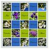 June Blooms - A Sampler