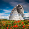 Picture by Lesley Martin<br /> <br /> 28 October 2014<br /> <br /> Published on 30 October 2014 on the font page of the Times.<br /> <br /> Late blooming poppies grow underneath The Kelpies in Falkirk, Scotland, UK, which coincides with the official launch of the 2014 Scottish Poppy Appeal this week. The appeal is particularly poignant this year as the centenary of the outbreak of the First World War is marked. The Kelpies are the largest equine sculptures in the world. Horses were heavily used in the First World War to transport ammunition and supplies to the front line and it is estimated that over 8 million died on all sides fighting in the war.
