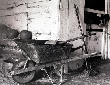 Wheelbarrow and Calf at Stimson Farm