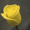11 x 14 <br /> <br /> Yellow Rose II
