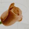 11 x 14<br /> <br /> Rose