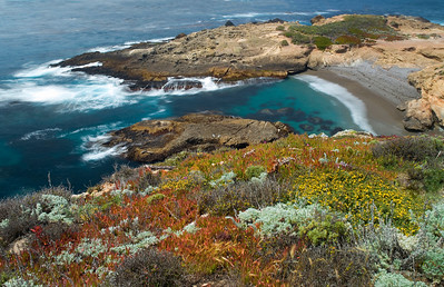 Pt Lobos Wildflowers