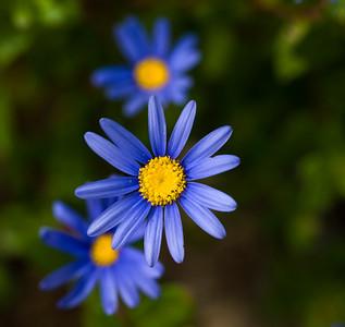 Simplicity  flower  macro
