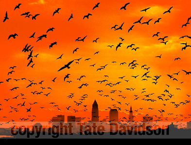 Cleveland Skyline with birds