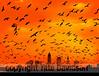 Cleveland Skyline with birds