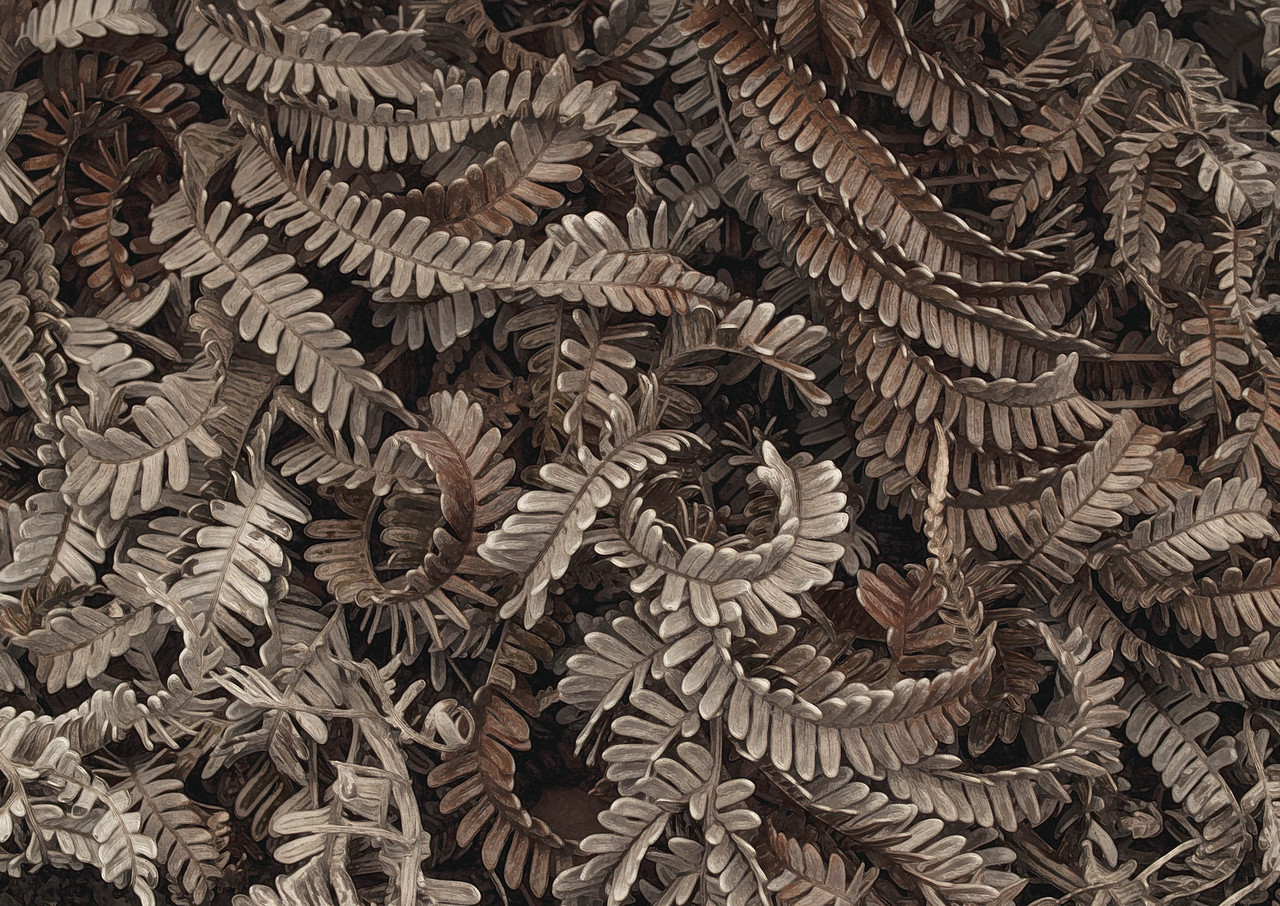 Dry Ferns - Hawaii