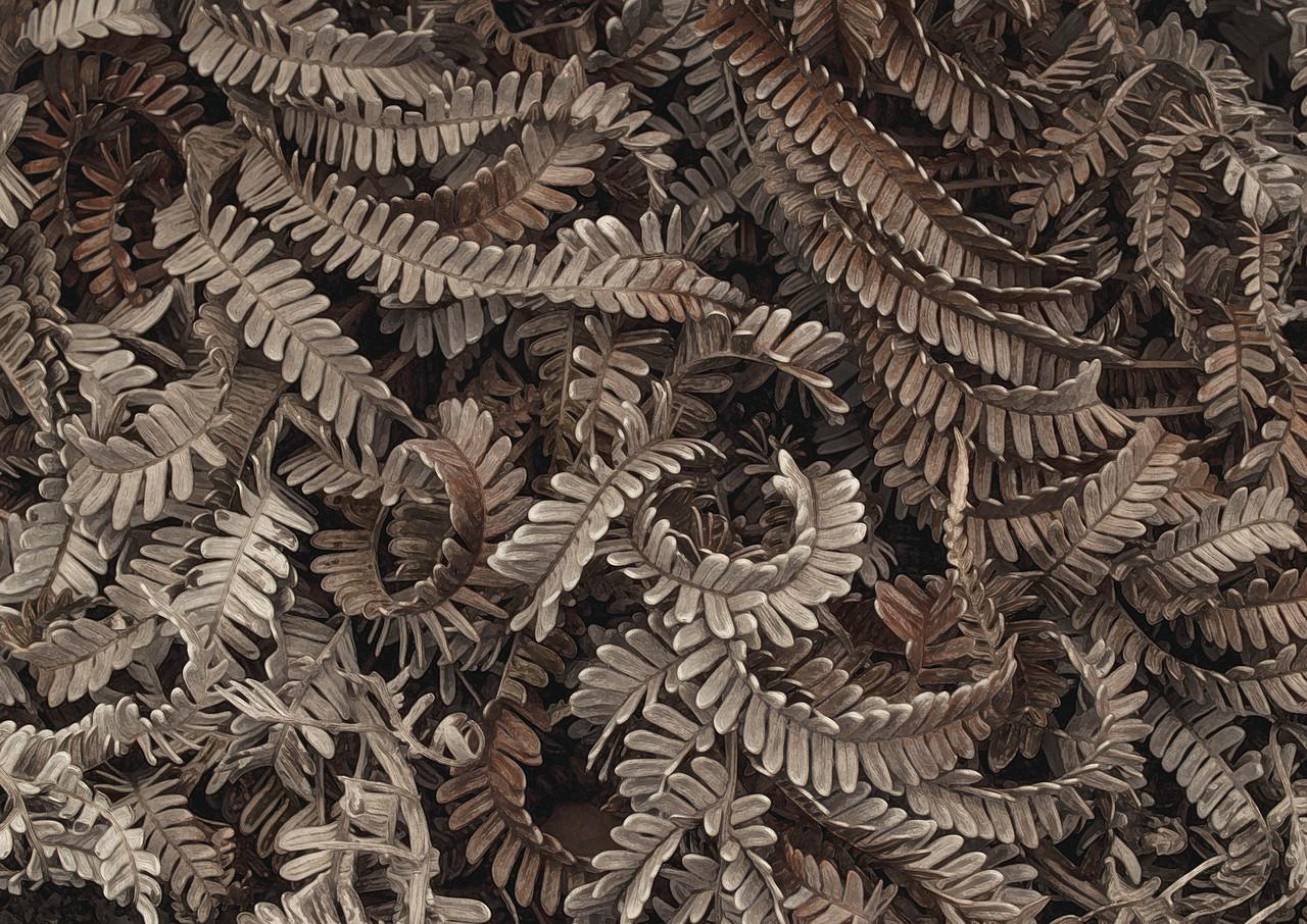 Dry Ferns - Hawaii