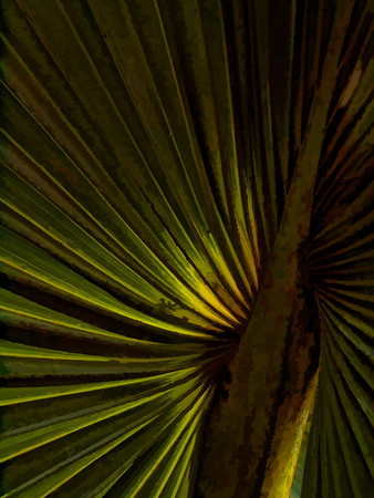 Palm Fronds - Costa Rica