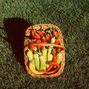 Peppers, Cayenes and Hungarian Wax,