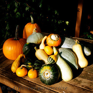 Pumpkins, Gourds and Squash