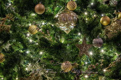 Detail of Christmas Tree with Lights