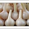 Pickled garlic (8.3.2011)