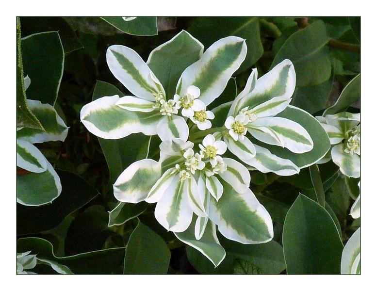 Garden green & white.