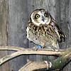 Owl at an animal rehab center. In larger sizes you can see his left wing is damaged. (6.17.2011)