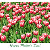 "Wishing all Smug mothers & spouses of Smuggers, a Happy Mother's Day! (5.13.2012)<br /> <br /> Remember that bestseller, ""Gorky Park""? That's where I shot these tulips."