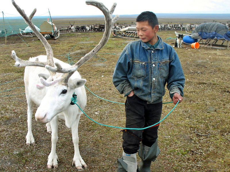 "In honor of the holiday season, here's one from last year above the Arctic Circle with the Nenets people. This Yamp-to Nenets boy was proudly showing off his favorite white reindeer. <br /> <br /> A nomadic people, this shot was taken on what's known as the ""big tundra"", accessible only by helicopter or reindeer, in the Kara Sea region of Russia. It's a difficult life making sure Santa's reindeer are ready for their December 24th flight :-)<br /> <br /> For more on the Nenets, you can have a look here:<br /> <br /> <br /> <a href=""http://rusuphotography.com/Russia/Nenets/9601892_tTD9H#650113439_TZZWm"">http://rusuphotography.com/Russia/Nenets/9601892_tTD9H#650113439_TZZWm</a>"